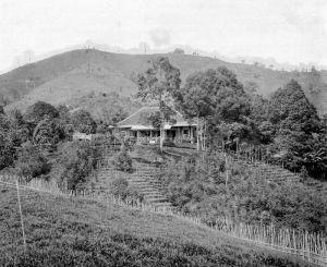 Landhuis di tengah perkebunan teh dan kina di lereng Gunung Melati.